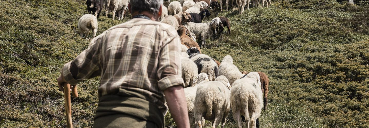 Salewa sheep transhumance
